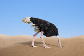 Image result for ostrich head in ground